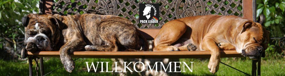 Bulldogman.de